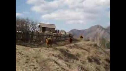 На Екскурзия В Алтай