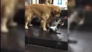 bugabuga куче разтървава котки