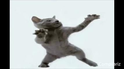 Танцуващи Котки Компилация