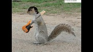 Animal I Have Become - Three Squirrels Grace