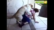 Куче скача на баба