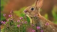 I like to smell the flowers -szeretem a virágok illatát
