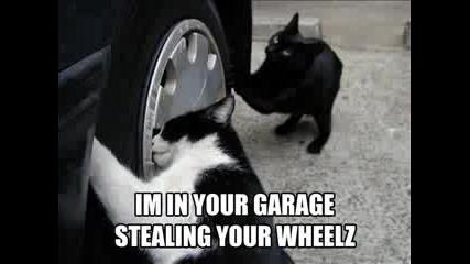 Много смешни котки :)