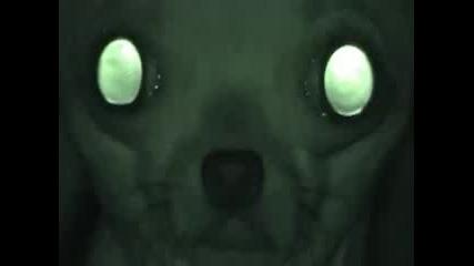 Потресаващи Кадри!!!секретно Видео На Наса Кадри На Живо Извънземно - шашкъния