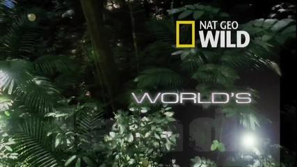 Мравояд - Най-странните в света