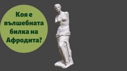 Коя е вълшебната билка на Афродита?