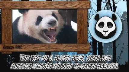 Топ Класация - 10 Сладки но и опасни животни , които могат да ви унищожат! Alltime10s