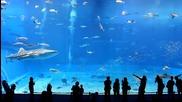 Изумително! Красотата на най - големия аквариум в света