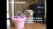 Смешни физиономий на кучета и котки 100% смях