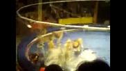 Luvove napadat cirkuv ukrotitel