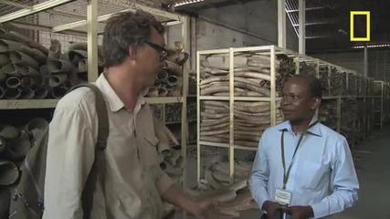 Battle for the Elephants Episode 4: Massive Ivory Stockpile