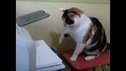 Котка Как Се Оправя С Принтер