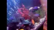 moiq akvarium s cihlidi
