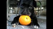 Смях - Куче смуче портокал