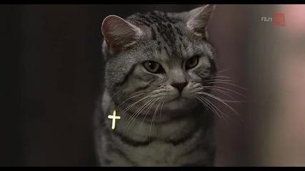 Г-ца Минус - филм с много котки в главните роли - (2 от 3)