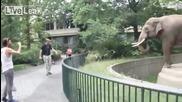 Слон поднася страхотна изненада на наблюдател • смях !