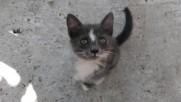 Gray cat mr