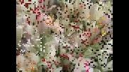Edvin Marton - Samba Florilor