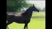 The Horses - Future