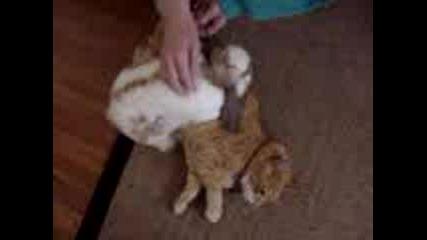 Заек И Котка