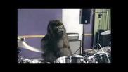 Луд Орангутан