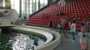 Волейбол с делфини
