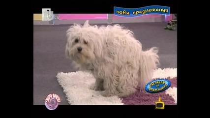 *смях* Какво направи това куче - Господари на ефира 18.03