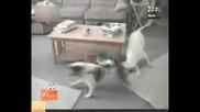 Смях с животни - Голямото въртене