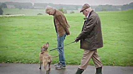 Най-самотното куче в Англия с роля в новия филм на Майкъл Бей и Антъни Хопкинс.