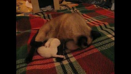Еднодневни котета и майка им - време за ядене