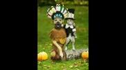 Смешни Снимки - Funny Video