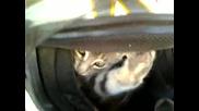 Коте се готви за старт