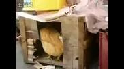 Куче Бруталнo Изнасили Кокошка!!!