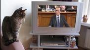 Орешарски по телевизора.ти иначе как си?