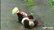 Клуб за забавления на малки пандички