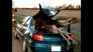 Странни , глупави и смешни инциденти или катастрофи с коли