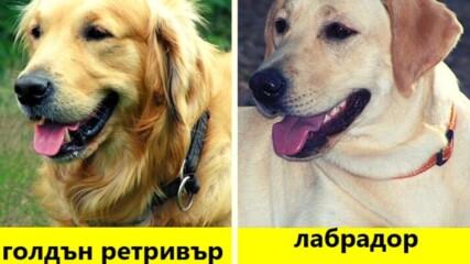 11 породи кучета, които дори любител на кучетата може да обърка
