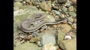 Най - Яката Колекция Със Снимки На Змии