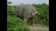 Ace Ventura - Rhino Birth