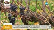 Френските винари се радват на глобалното затопляне