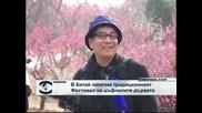 В Китай започна фестивала на цъфналите дървета