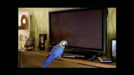 Реклама на банка Дск със двете разговорливи папагалчета