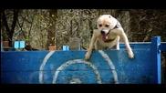 Amazing Parkour Dog