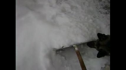 куче се бори с сняг