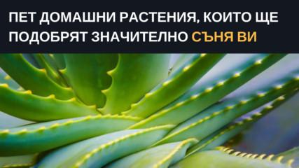 Пет домашни растения, които ще подобрят значително съня ви