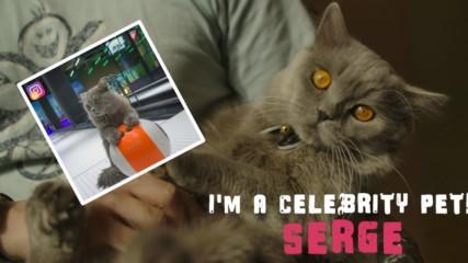 Аз съм домашен любимец - звезда! Котката, която се нуждае от слава!