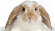 Зайченцето бяло - детска песничка