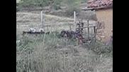 облаиване на прасе