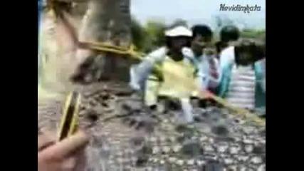 Най - Гигантския Крокодил Виждан Някога... (високо качество)