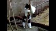 Забавна Котка Играе На Пилон